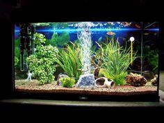 Gli accessori per acquario tartarughe che non possono mancare sono sicuramente: il filtro, la lampada UVB e il termoriscaldatore