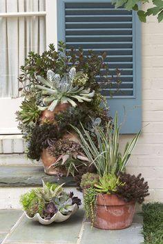 Succulent Styles
