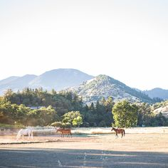 The beautiful view of Mt St Helena from the back yard at Duffy's