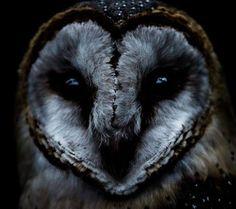 ☽ I howl at the rising moon ☾ : Photo