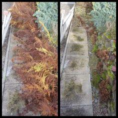 Versteckte Wege nach vergessenen Ecken im Garten:-) #gartenweg #gehweg #pflanzenschnitt #herbstlaub #gärtnern #rösrath