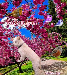 Good Morning World, Good Morning Gif, Greek Language, 1 Gif, True Words, Teddy Bear, Dogs, Animals, Spring