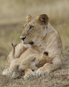 NJ Wight's Wild! Life World Lion Day
