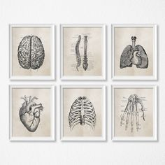Perfect for a Doctor's office or a clinic, these cotton canvas posters certainly exhibit the anatomy with an old school feel. Available in a variety of sizes. Frame not included. Offered in up to 9 sizes. Product Details: Material: Canvas Frame: No Size: Anatomy Art, Human Anatomy, Retro Poster, Vintage Posters, Canvas Poster, Canvas Art Prints, Art Illustration Vintage, Graphic Illustration, Images Murales