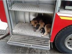 Heroic mother dog saves her puppies from blazing house fire