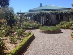 Formal rose garden with box hedging From 2014 garden tour