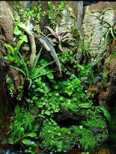 Duff's Terrarium Collection - The Planted Tank Forum