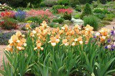 landscaping with iris   The American Iris Society 2011 / website design: McHale Creative