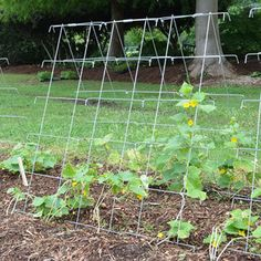 Park's Cucumber Support - plant lettuce underneath to keep it from bolting