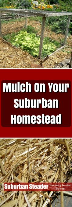 Not sure how to use mulch on your suburban homestead? Can't quite figure out what to use for mulch? We've got you covered here at Suburban Steader!