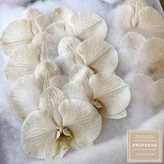 NEW | New cloud babies ☁️☁️ Half Dyed Chocolate Phalaenopsis for the win! 🙈 @sunprideflora always brings the goods 😎👊🏻 #topstuff #OnlyAtProfresh