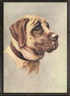 PHILLIPS-OUR DOGS P30 (POSTCARD)-#12- THE MASTIFF