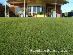 St Augustine Grass Care and Lawn Maintenance Schedule . - How to care for the garden? Once you've reached your dream garden and your regular green space, you'll need to do regular maintenance or maintenance to keep it in its nat Lawn Care Schedule, Schedule Design, Home Landscaping, Front Yard Landscaping, Design Thinking, St Augustine Grass, Lawn And Garden, Garden Grass, Indoor Garden