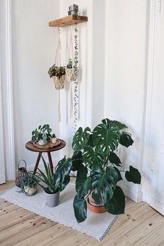 Plantas para todos los estilos de mobiliario - ROPA VIVA - Las plantas dan nueva vida a su hogar y crean un ambiente agradable. Decoration Plante, Decoration Table, Entryway Decor, Bedroom Decor, Bathroom Plants, Interior Garden, Interior Plants, Garden Care, Moroccan Decor