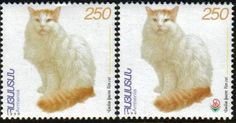 armenian cats - Google Search