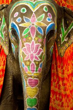 When people hear India they think about elephants which is actually very true. In most Asian countries including India elephants means wisdom. For the Hindus their god named 'Ganesh' is also in the shape of an elephant which represents wisdom. Elephant India, Elephant Love, Colorful Elephant, Elephants In India, African Elephant, Happy Elephant, African Animals, Diwali Elephants, Indian Animals