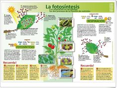 Animal and Plant Cells + Organelles Read and Apply {NGSS Leaving Home, Interactive Activities, Interactive Notebooks, Science Notebooks, Plant Science, Earth Science, Plant Cell Organelles, Science Safety Rules, Physical Science