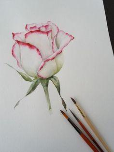 … Aquarell, C… Watercolor. … watercolor, Check more at - Painting & Drawing, Pink Painting, Watercolor Paintings, Rose Paintings, Painting Flowers, Drawing Flowers, Flower Drawings, Watercolor Video, Watercolor Rose