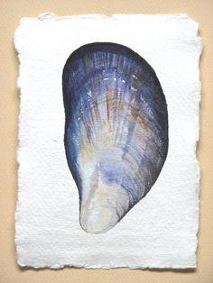 Mussel shell original watercolour study illustration art painting