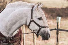 (92) Grain de Pixel - Photographie Equestre - Photos