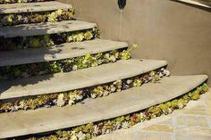 Succulents growing out from under floating concrete stairs.  http://pinterest.com/debraleebaldwin/?d