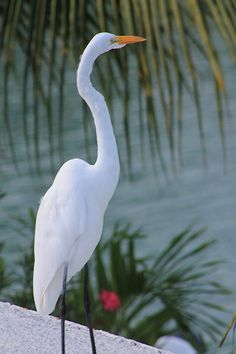 Crane - Key Colony Beach.  Key Colony is a very small town on the island of Marathon, Florida. It is 80 miles away from Cuba.    ..z