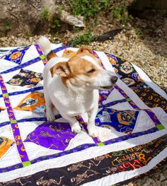 ❤ =^..^= ❤  NaC! Charly & Ben's Crafty Corner: Pets on Quilts 2014.