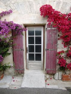 Bougainvilliers... Provence
