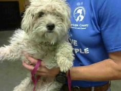 ~ Animal ID #A3586234 ‒ My Name is CURLY. I am a Female, White Miniature Poodle mix. The shelter thinks I am about 5 years old. I have been at the shelter since March 30, 2015. Maricopa County Animal Care & Control West Valley Animal Care Center ‒ (602) 506-7387 2500 S. 27th Avenue Phoenix, AZ Fax: (602) 506-2739 https://www.facebook.com/OPCA.Shelter.Network.Alliance/photos/pb.481296865284684.-2207520000.1427996641./801187766628924/?type=3&theater