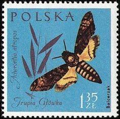 Polish postage stamp portraying the deathshead hawk moth