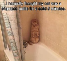 I honestly thought my cat was a shampoo bottle - 9GAG