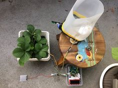 An Urban Plant Watering Solution