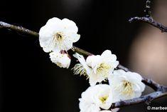 undefined Dandelion, Flowers, Plants, Dandelions, Plant, Taraxacum Officinale, Royal Icing Flowers, Flower, Florals