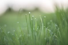 Lawn care, landscaping, lawn, grass seed, lawn aerator, weeding, weed and feed, green grass, aeration, lawn fertilizer, scotts lawn, lawn care tips