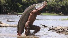 Homem carrega um pirarucu, peixe de maior importância econômica da Amazônia, que já não é mais encontrado em comunidades locais do Pará, onde sua exploração é feita de forma predatória.