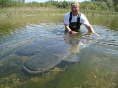 Wow! That's a big catfish!