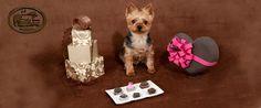 A muchos nos encanta el chocolate en el Día de San Valentín heart emoticon, pero asegúrese de no compartirlo con su perro. La teobromina en el chocolate es tóxica para los perros. http://go.usa.gov/3qkNR (en inglés) #SanValentin