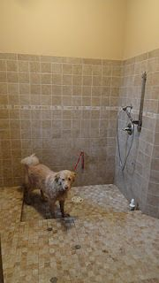 97 best dog wash dog bath images on pinterest pets bathrooms and 3 sided dog wash stall i want one solutioingenieria Choice Image