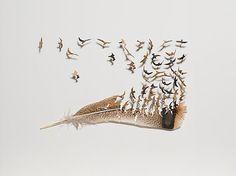 Bildergebnis für feathers art