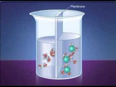 Awesome diffusion and osmosis animation