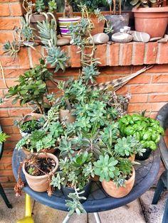 My plants...