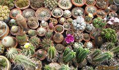 cacti - Google Search