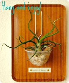 """Suburbia Soup: Don't """"Strain"""" Yourself Planter Tutorial - How to Make a Planter from a Strainer"""