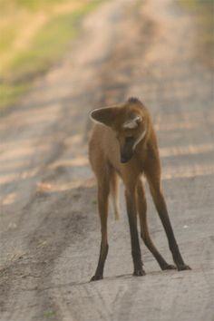 Aguará Guazú - Comunidad argentina de fotógrafos de naturaleza