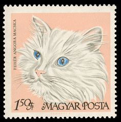 "An illustration of a cat, labeled ""White Persian"", on a Hungarian postage stamp (1968)."