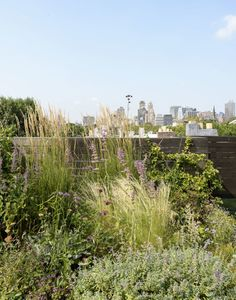 Grasses are a great choice for roof top gardens. Plants are highly susceptible to the impact of extreme (and rapidly changing) weather conditions.Julie Farris planted this roof-top meadow garden in Brooklyn. Photo by Matthew Williams
