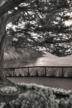 Esalen Institute Big Sur Infrared Landscape succulents by Jane Linders Infrared Photography, Big Sur, Pattern Design, Succulents, Country Roads, Landscape, Pictures, Travel, Shape