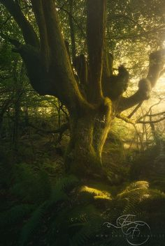 Woodland Realm--Asturias, Spain by Enrico Fossati on 500px