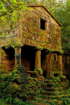 abandoned moss covered building