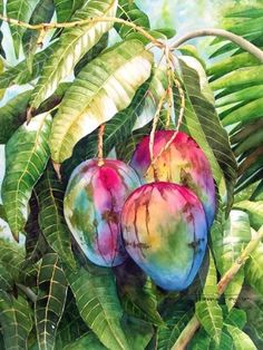 Theresa Ferguson - beautiful mangos...love the colors